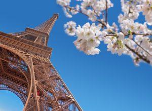 Eiffel tower and cherry blossom, Paris at springtime concept